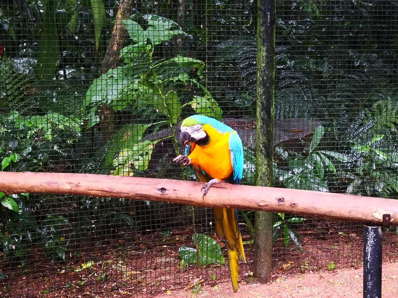 Ein kleinerer Papagai