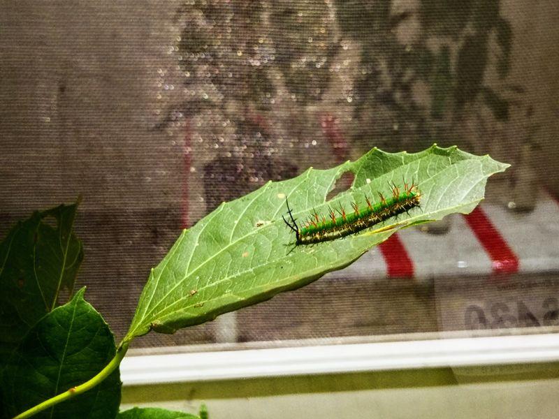 Eine Raupe im Schmetterlingshaus