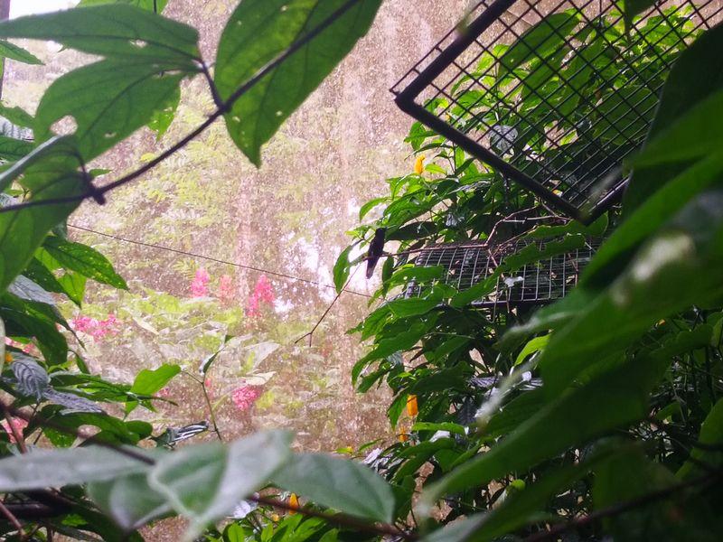 Ein entspannter Kolibri