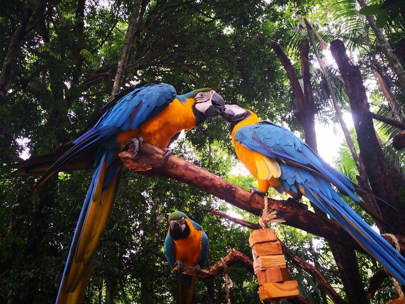 Zwei große Papageien